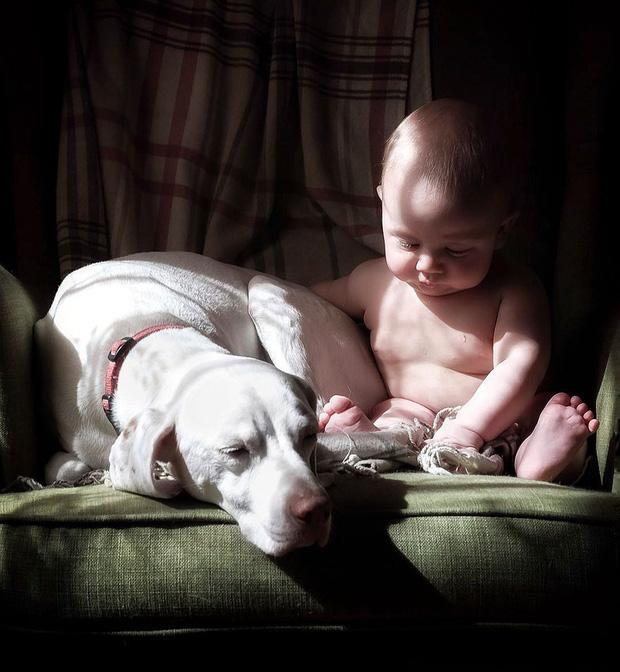 Tình bạn ấm áp của em bé và chú chó từng là nạn nhân của nạn bạo hành động vật - Ảnh 3.