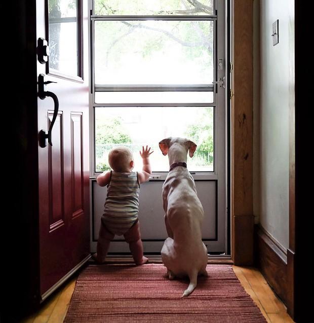 Tình bạn ấm áp của em bé và chú chó từng là nạn nhân của nạn bạo hành động vật - Ảnh 7.