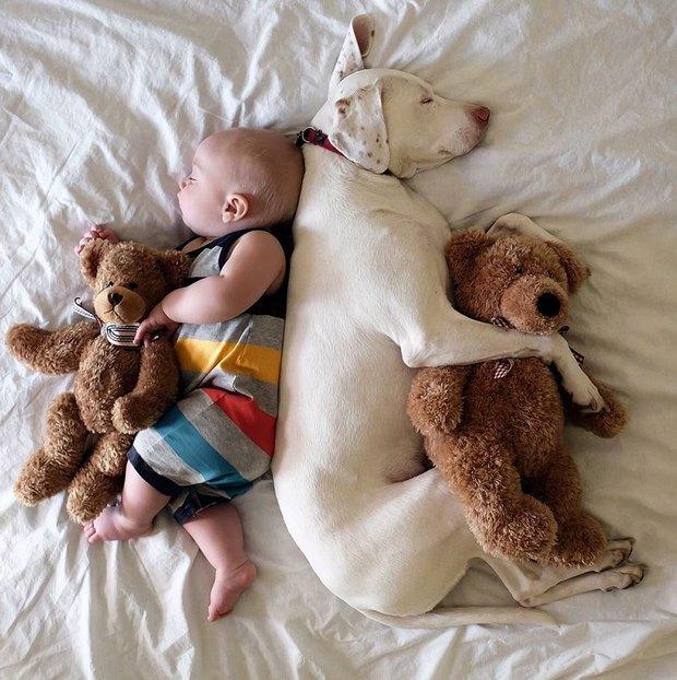 Tình bạn ấm áp của em bé và chú chó từng là nạn nhân của nạn bạo hành động vật - Ảnh 9.