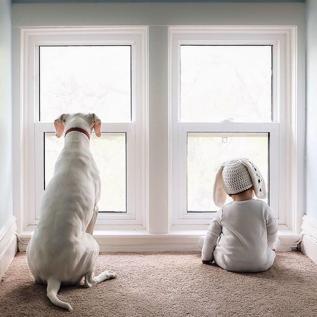 Tình bạn ấm áp của em bé và chú chó từng là nạn nhân của nạn bạo hành động vật - Ảnh 15.