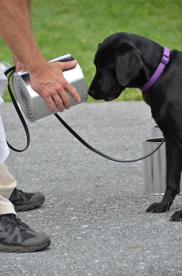 Lulu - cô chó bị CIA sa thải vì không thích theo đuổi sự nghiệp đặc vụ đánh hơi bom - Ảnh 2.