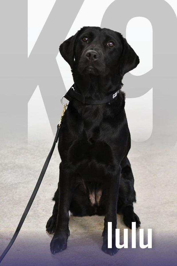 Lulu - cô chó bị CIA sa thải vì không thích theo đuổi sự nghiệp đặc vụ đánh hơi bom - Ảnh 1.