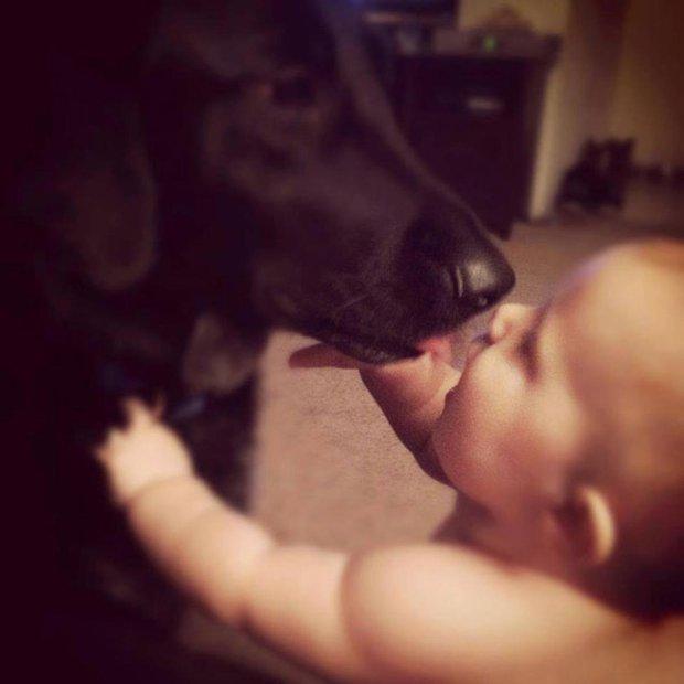Chú chó cứ gặp người giữ trẻ là cực kì hung dữ, chủ nhà lén đặt máy ghi âm và phát hiện sự thật đau lòng - Ảnh 2.