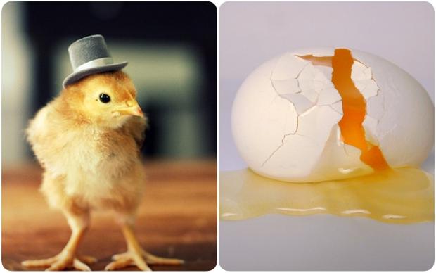 Điều ít người biết về số trứng gà chúng ta vẫn ăn hàng ngày - Ảnh 1.