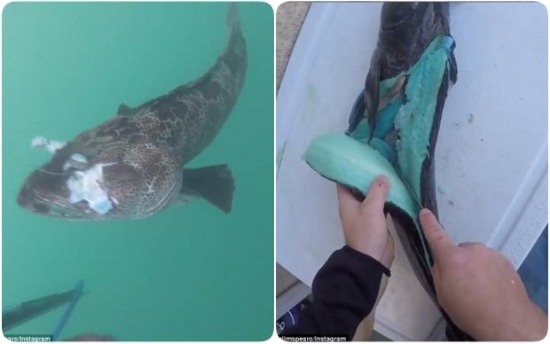Cận cảnh loài cá có thịt xanh lè dài đến 1m đặc biệt nhất hành tinh - Ảnh 1.