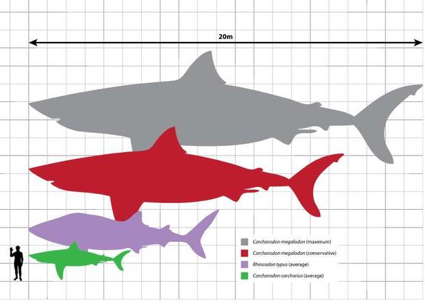 Thứ gì đã giết chết đại cá mập Megalodon? Cuối cùng khoa học cũng giải đáp được - Ảnh 1.