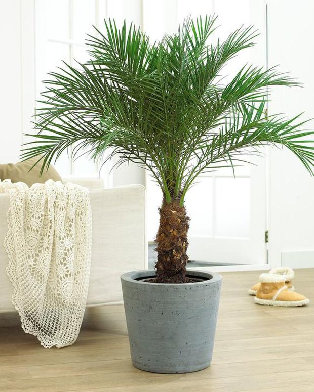 NASA khuyên trồng những loại cây này trong nhà, bạn sẽ không bao giờ bị cảm lạnh và mất ngủ nữa - Ảnh 4.