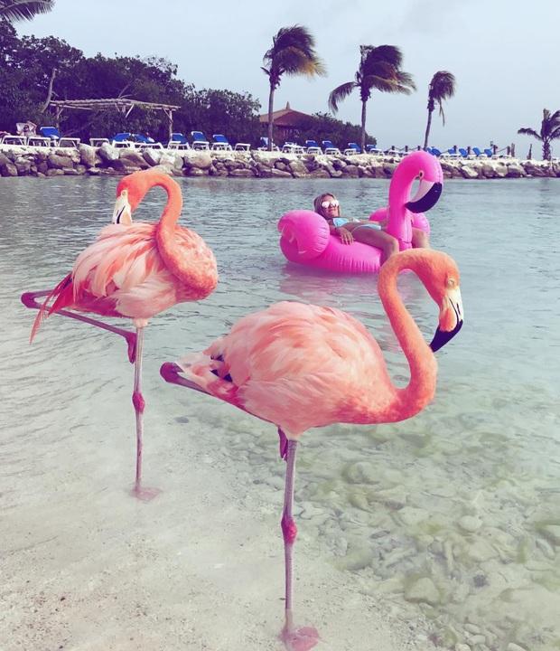 Nóng như thế này chỉ muốn đến ngay chốn thiên đường này tắm biển, chụp ảnh sống ảo cùng hồng hạc mà thôi! - Ảnh 1.