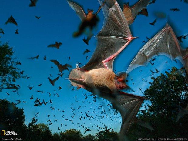 Sắp nhật thực rồi, các loài động vật này như hóa điên mỗi khi hiện tượng này xảy ra - Ảnh 3.