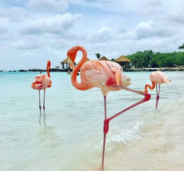 Nóng như thế này chỉ muốn đến ngay chốn thiên đường này tắm biển, chụp ảnh sống ảo cùng hồng hạc mà thôi! - Ảnh 5.