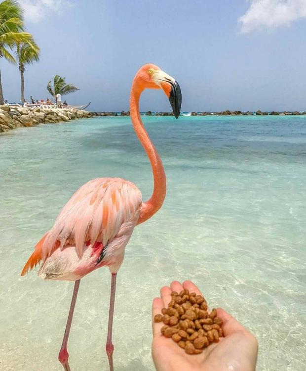 Nóng như thế này chỉ muốn đến ngay chốn thiên đường này tắm biển, chụp ảnh sống ảo cùng hồng hạc mà thôi! - Ảnh 18.