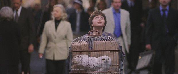 Fan khắp thế giới kỷ niệm ngày sau 19 năm, Harry Potter đưa các con lên tàu tốc hành trở lại Hogwarts - Ảnh 1.