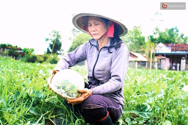 Nông dân Quảng Ngãi phải đem dưa hấu đổ cho bò ăn: Cần lắm sự chung tay giải cứu của cộng đồng - Ảnh 4.