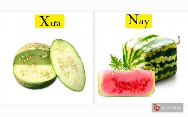 Tổ tiên của các loại rau quả mà ta vẫn ăn ngày nay trông như thế nào? - Ảnh 1.
