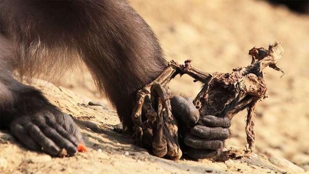 Hiện tượng ăn xác con trong thế giới động vật: lần đầu tiên khoa học được chứng kiến và vẫn chưa thể lý giải - Ảnh 5.