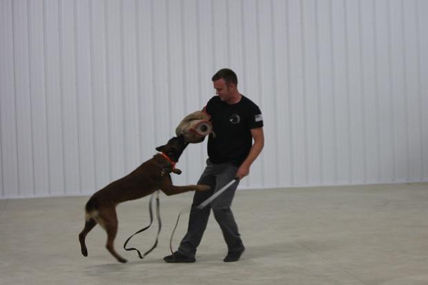 Bạn sẽ kinh ngạc khi biết đến quy trình chặt chẽ để huấn luyện một chú chó cảnh sát - Ảnh 6.