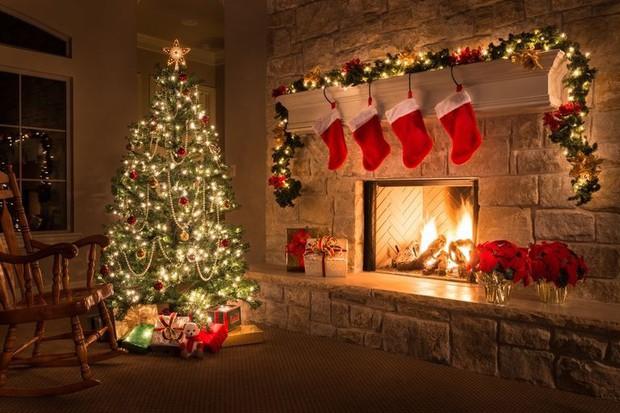 Nhiều người vô tư trồng cây thông Noel trong nhà mà không biết đến hậu quả có thể tiềm ẩn này - Ảnh 1.