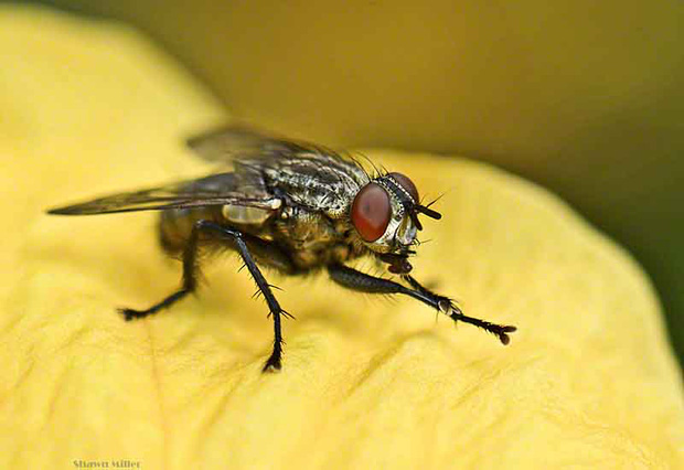 Tin được không, hóa ra loài ruồi vẫn biết rửa tay trước khi ăn đấy - Ảnh 2.