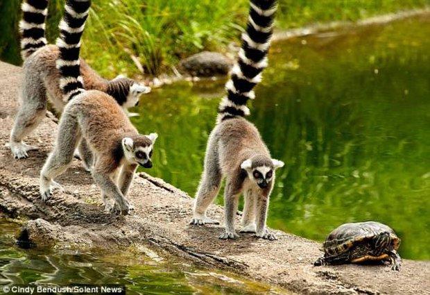 Sắp nhật thực rồi, các loài động vật này như hóa điên mỗi khi hiện tượng này xảy ra - Ảnh 6.