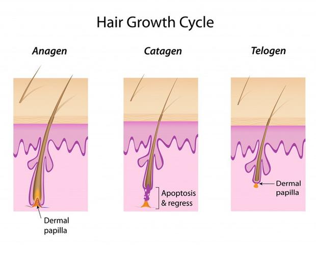Bứt rứt trước câu hỏi vì sao lông mi, lông mày không mọc dài ra được như tóc? - Ảnh 1.
