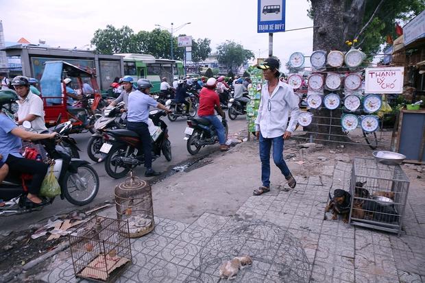 Hàng chục gian hàng gần sân bay Tân Sơn Nhất ồ ạt thanh lý chó, gà, cây cảnh, giao thông Sài Gòn hỗn loạn - Ảnh 7.