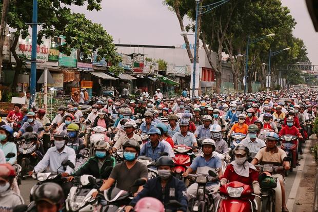 Hàng chục gian hàng gần sân bay Tân Sơn Nhất ồ ạt thanh lý chó, gà, cây cảnh, giao thông Sài Gòn hỗn loạn - Ảnh 14.