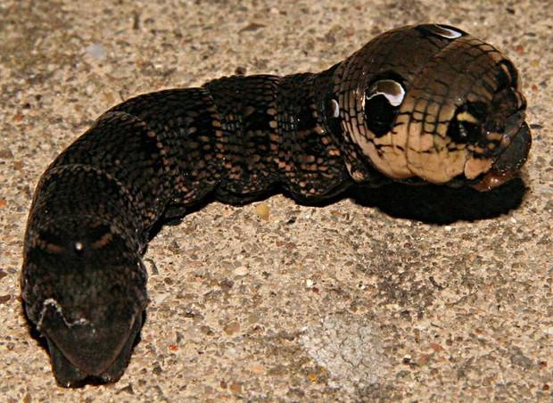 Tìm thấy quái vật rắn hai đầu trong vườn nhà và tất cả đều ngỡ ngàng trước danh tính thực của nó - Ảnh 3.