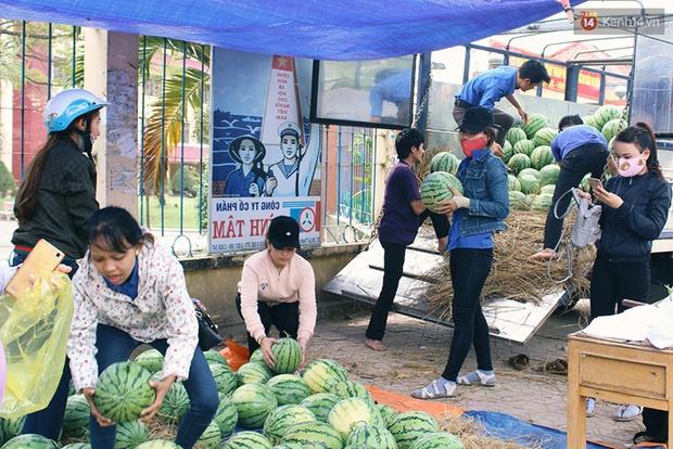 Nông dân Quảng Ngãi phải đem dưa hấu đổ cho bò ăn: Cần lắm sự chung tay giải cứu của cộng đồng - Ảnh 12.