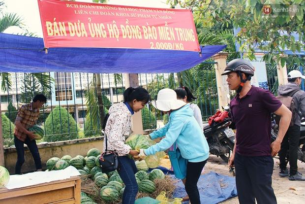 Nông dân Quảng Ngãi phải đem dưa hấu đổ cho bò ăn: Cần lắm sự chung tay giải cứu của cộng đồng - Ảnh 13.