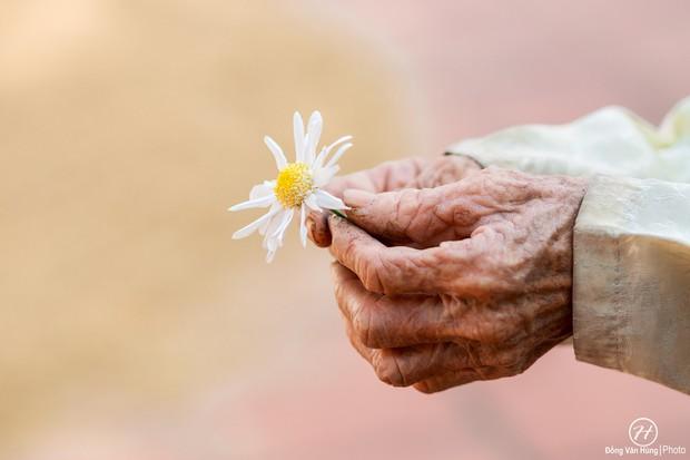 Người mẫu 99 tuổi điệu đà tạo dáng bên hoa cúc họa mi - Ảnh 7.