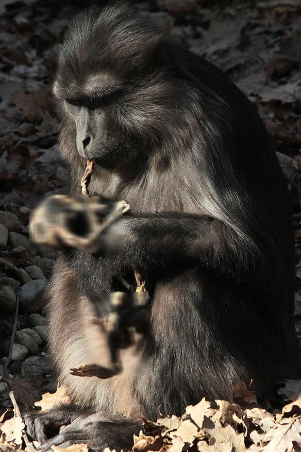 Hiện tượng ăn xác con trong thế giới động vật: lần đầu tiên khoa học được chứng kiến và vẫn chưa thể lý giải - Ảnh 2.