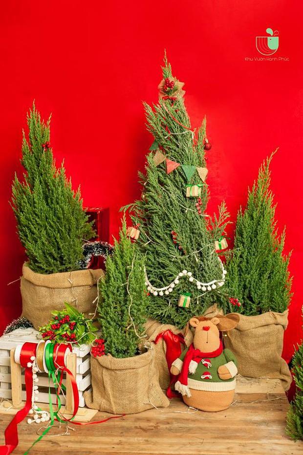 Noel năm nay, giới trẻ hai miền thi nhau mua cây tùng về chăm và chụp ảnh sống ảo - Ảnh 6.