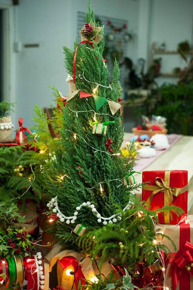 Noel năm nay, giới trẻ hai miền thi nhau mua cây tùng về chăm và chụp ảnh sống ảo - Ảnh 11.