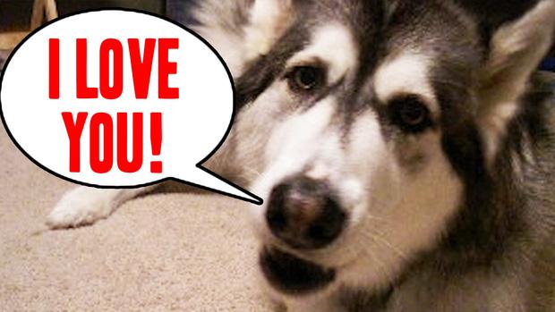 Chó cũng biết nói? Phát hiện gây sốc nâng tầm trí khôn của chó lên một đẳng cấp mới - Ảnh 1.