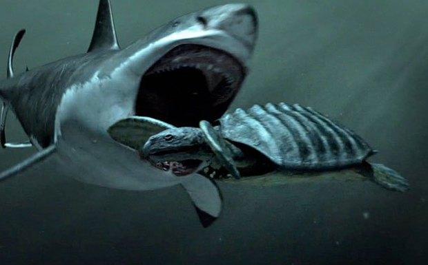 Thứ gì đã giết chết đại cá mập Megalodon? Cuối cùng khoa học cũng giải đáp được - Ảnh 4.