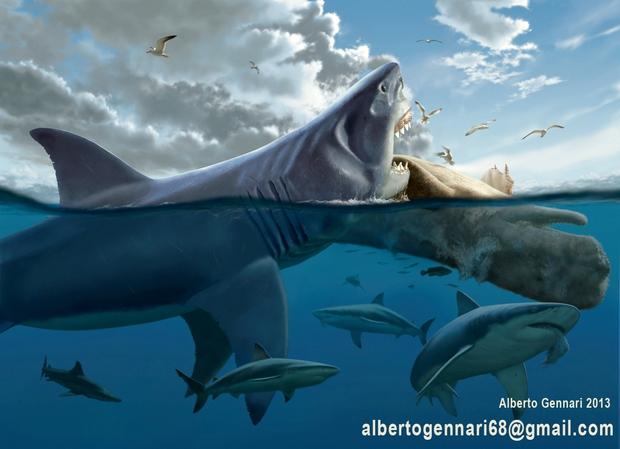 Thứ gì đã giết chết đại cá mập Megalodon? Cuối cùng khoa học cũng giải đáp được - Ảnh 3.