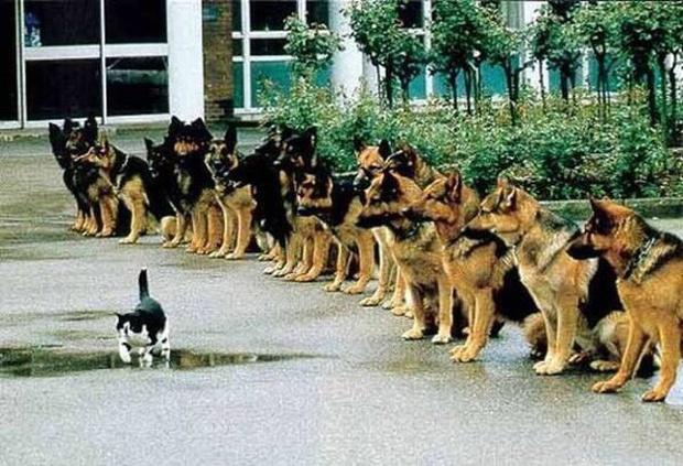 Bạn sẽ kinh ngạc khi biết đến quy trình chặt chẽ để huấn luyện một chú chó cảnh sát - Ảnh 4.