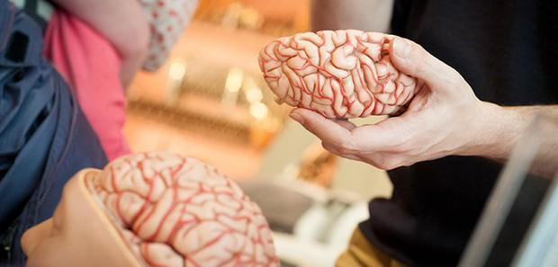 Bộ não tự ăn chính mình và những nguy hại kinh hoàng khi bạn thức khuya thường xuyên - Ảnh 1.