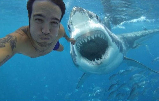 Sự thật đằng sau bức ảnh rùng rợn Selfie cùng cá mập khiến cư dân mạng dậy sóng - Ảnh 1.