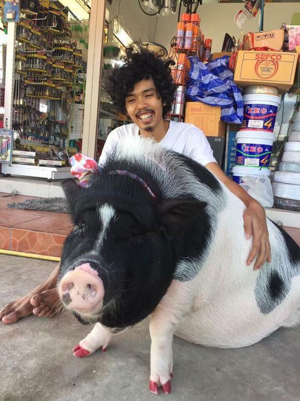 Anh chàng mua lợn cảnh mini bị lừa thành lợn khổng lồ - Ảnh 2.