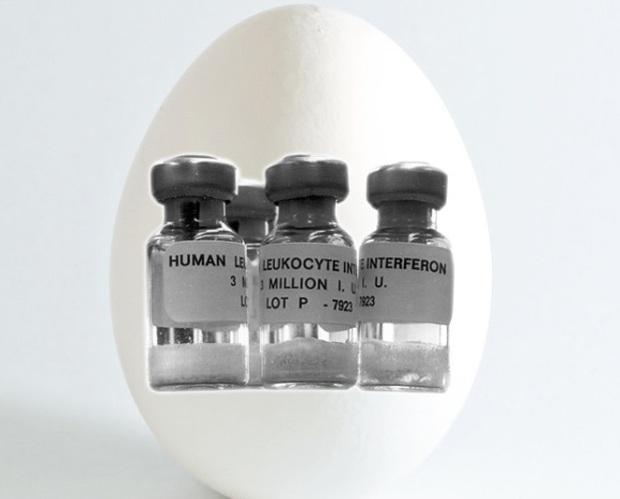 Các nhà khoa học Nhật Bản vừa lai tạo thành công giống gà đẻ ra thuốc chữa bệnh - Ảnh 1.