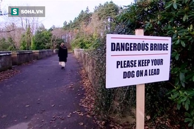 Cây cầu ma ám, hầu hết những chú chó đi ngang qua đều lao xuống tự sát - Ảnh 1.