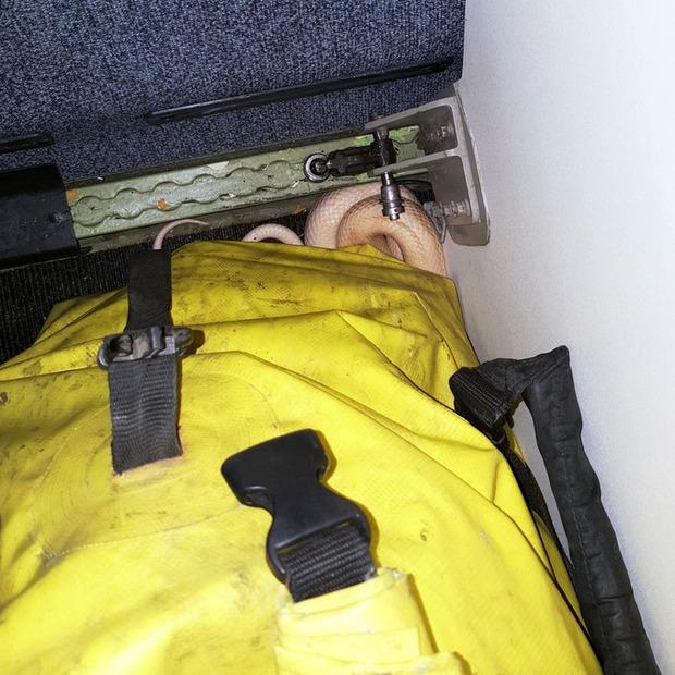 Đi máy bay, hành khách phát hoảng khi thấy rắn bò lồm ngồm ra khỏi túi xách - Ảnh 2.