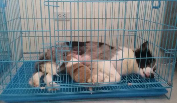 Hà Nội: 4 chú chó con dòng Border Collie nằm thoi thóp sau khi bị ném từ tầng 40 chung cư xuống đất - Ảnh 6.