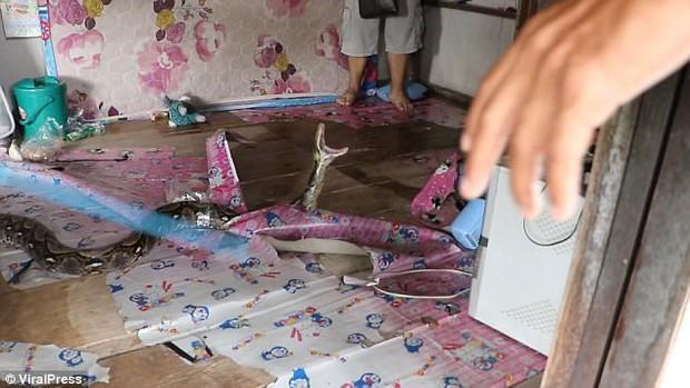 Trăn khổng lồ trốn trong nhà dân, cha sợ con gái bị nuốt chửng - Ảnh 2.