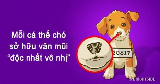 Nếu con người có vân tay thì mỗi chú chó lại sở hữu vân mũi cực đặc biệt đấy! - Ảnh 1.
