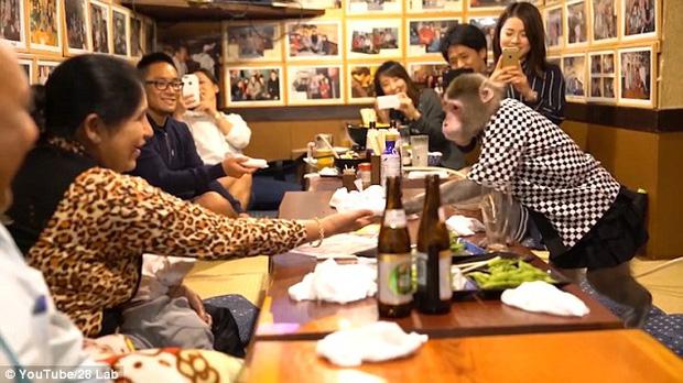 Những chú khỉ bồi bàn tại Nhật Bản: Trò đáng yêu hay bạo hành động vật? - Ảnh 2.