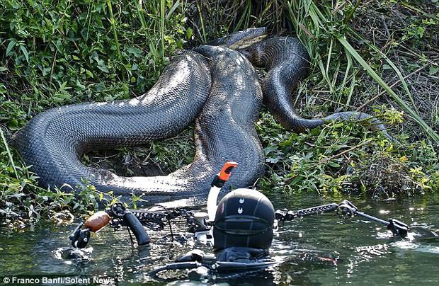Những hình ảnh chân thực nhất về quái vật sông Amazon từ người thợ lặn dũng cảm không bảo hộ - Ảnh 2.