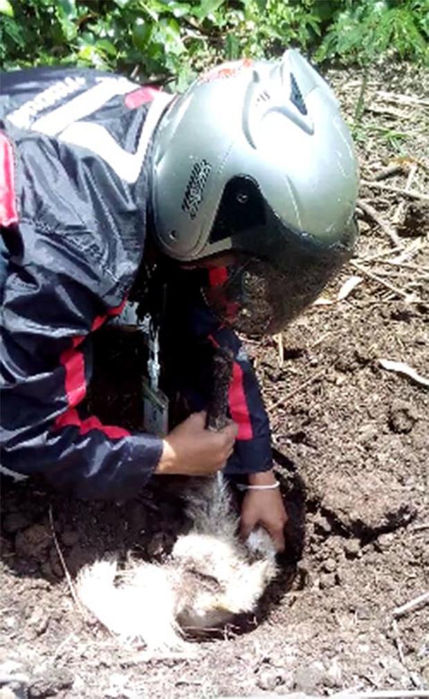 Đi làm về mới biết chó cưng đã chết và được chôn cất, người chủ liền làm một việc khiến ai cũng bật khóc - Ảnh 3.
