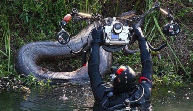 Những hình ảnh chân thực nhất về quái vật sông Amazon từ người thợ lặn dũng cảm không bảo hộ - Ảnh 3.